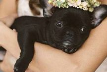 Animals at weddings / 0
