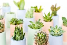 Get Prickly With Us