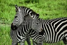 Animals by Curioso