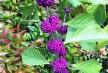 Native Plants Wildflowers