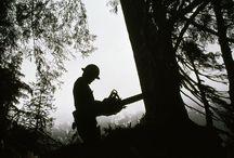 Logging / by April Miller