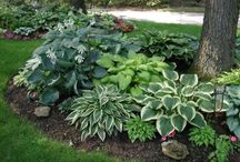 Bushes, Shrubs and Plants