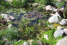Gardening - Water Elements