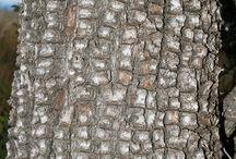 Trees - Juniper