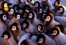 Grupo de pinguitos