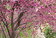 Trees in Spring / by The Davey Tree Expert Company