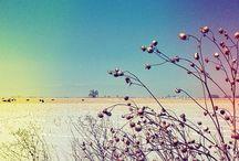 Winter Scenes / Photography capturing winter nature scenes