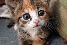 kitties paradise