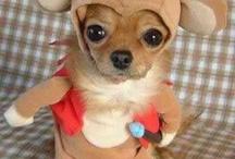 Dog Costumes / by Jennifer Newby