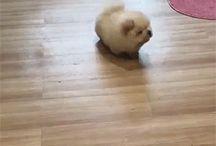 cute animals/brookie