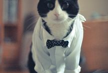 Well-Dressed Cats / Cats in jaunty attire
