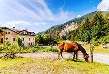Paesaggi di #Carnia #montagna #cavalli