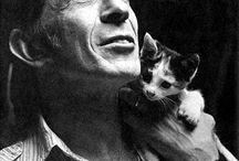 Gatos e seus famosos