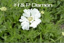 G-Fresh grower H&P Damen / Our business has started in 1995. Before that, we were already cultivating flowers for years as a hobby. Initially, the business started as a partnership consisting of my brother, our spouses and me.