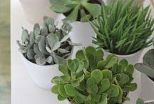 ★ Plants