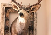 Mounts & Displays / Unique taxidermy.