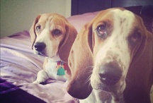 Pets / by Jennifer Hampton (Burdette)