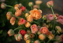 fleurs en mai