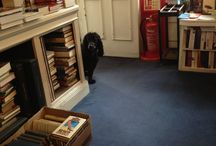 Bookshop cats and dogs / Appreciating furry booksellers and shoppers - a little lacking in cats at the moment but I'm sure I'll meet a bookshop cat one day...