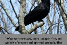 Animal symbolism/totemanimals
