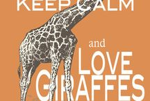 Giraffes / I love giraffes and I'm always looking for cute ones!