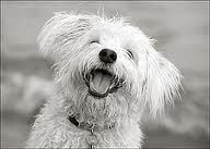 L♥ve to Laugh / by Jacqueline Claxton