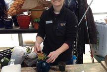 Terrariums, fairy gardens & planters / Pre-planted gardens at Winterberry!