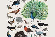 poster flora fauna