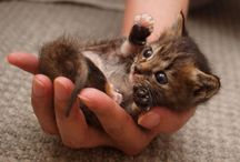 Painfully Cute!