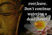 Buddha doh