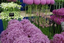 Jardines / Gardens
