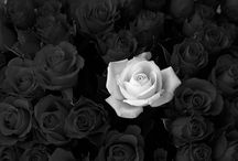 Rose B&W / Rose and Flowers Black and White