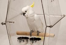 Parrot Travel / Some great items and ideas for traveling with your Feathered Friends. Take your Bird everywhere with you.