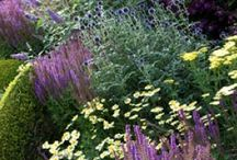 Sunny garden / Purple, blue, pink and white perennials plus some grasses