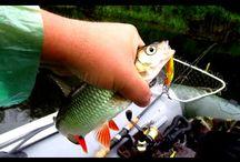 Рыбалка на Волге летом. Ловля белого хищника на спиннинг.
