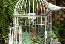 Bird cage succulants