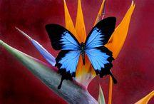 Butterflies / by Tina s