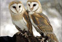 Everything Owls & a few Beautiful birds