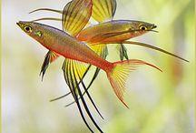 Research _ Aquarium