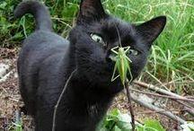 CAT(=^ェ^=)