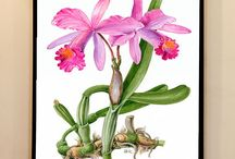 Botanical Illustrations / Scientific illustrations created by botanical artist Krisztina Biro from Hungary.