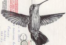 birds   estudos