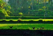 Inspiratie: Sawa / Rijstvelden, theeplantages, bergketens die zich aftekenen tegen de horizon. Een oase van rust en weelde.