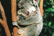 Aussie cuteness / by Ros Hassall
