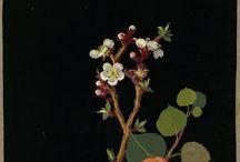 Botanical Prints / by Cindy Want