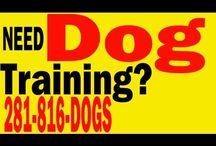 Houston Dog Training / Dog Training Services in Houston TX - Therapy Dog Training, Service Dog Training, Puppy Training, Dog Behavior Training, Protection Dog Training, etc. http://www.DogTrainingofHouston.com