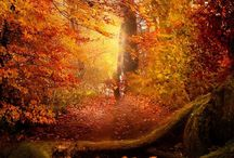 Autumnal beauty......