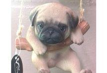 rocking pug