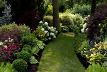 Garden / by Carol Ray