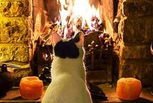 Fireside Pets  / by Heatilator Fireplaces